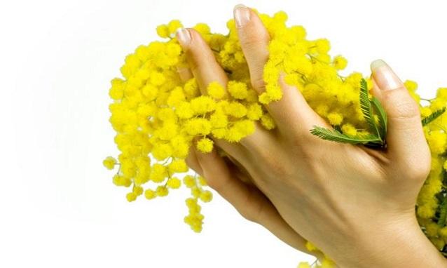 consegna fiori e mimosa