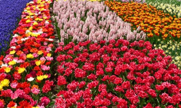 floricoltura e terreno