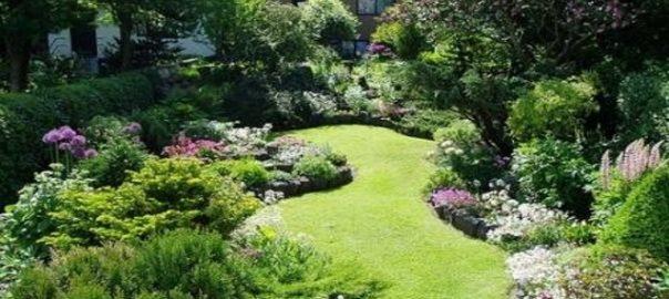 piante verdi o piante fiorite per il giardino