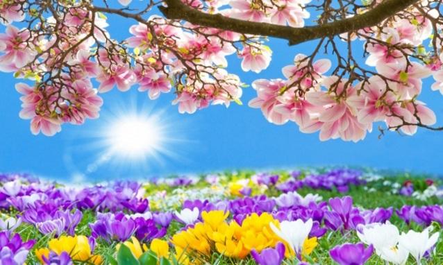 fiori di pasqua primavera
