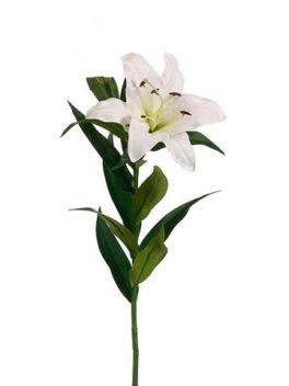 1 Lilium Giglio Bianco