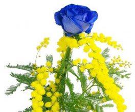 Una bellissima rosa blu con mimosa