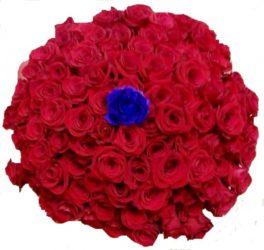99 rose rosse + una rosa blu al centro del bouquet