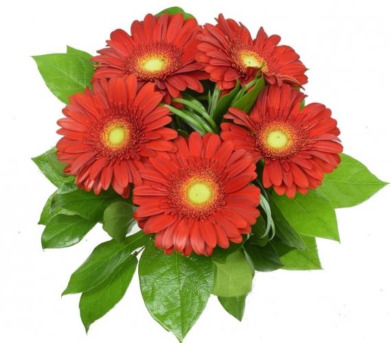 Bouquet gerbere rosse