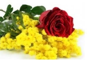 8. Marzo - Bouquet con 1 rosa rossa e mimosa