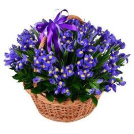 cesto di iris spedizione online