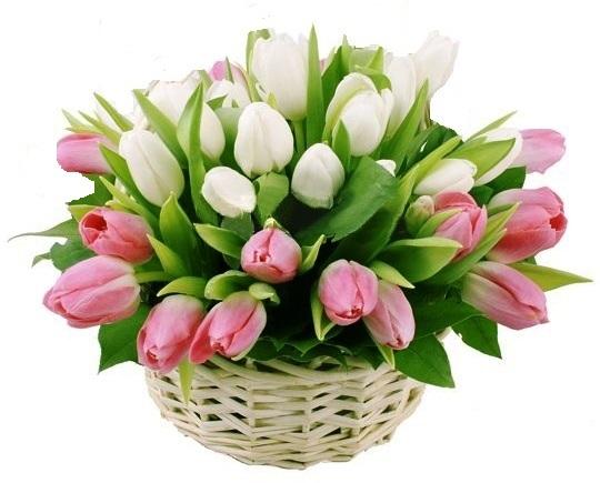 Cesto di fiori bellissimi composizione con tulipani Rosa e Bianchi