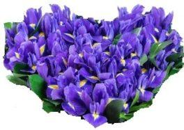 Composizione a forma di Cuore con iris blu