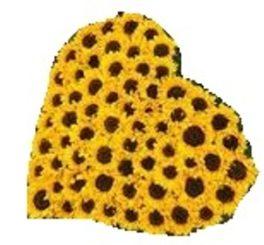 Composizione a forma di cuore con 60 girasoli