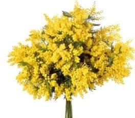 Festa della Donna -  Mazzo Mimosa