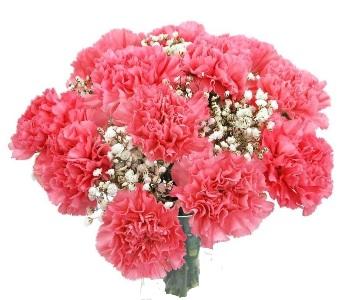 Bouquet Garofani Rosa