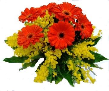 Bouquet di Mimosa e Gerbere Rosse