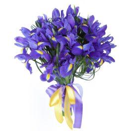 Omaggio floreale di soli iris blu