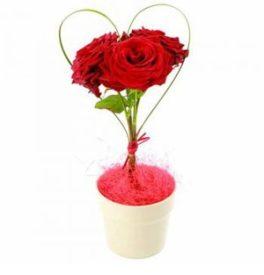 Composizione cuore con 3 rose rosse in vasetto