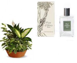composizione con piantine verdi con profumo fiori d'ulivo