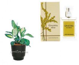 pianta dieffenbachia con profumo alla ginestra